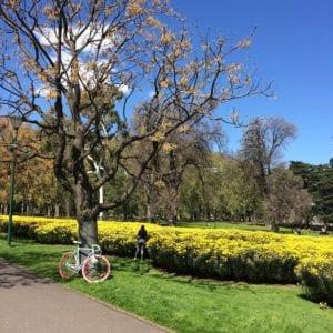 Carlton Gardens em Melbourne, Austrália - Foto Carol Saldanha