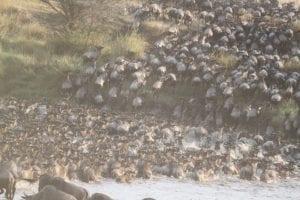 Great Migration no Serengeti - Viagem Para África- Foto Pixabay