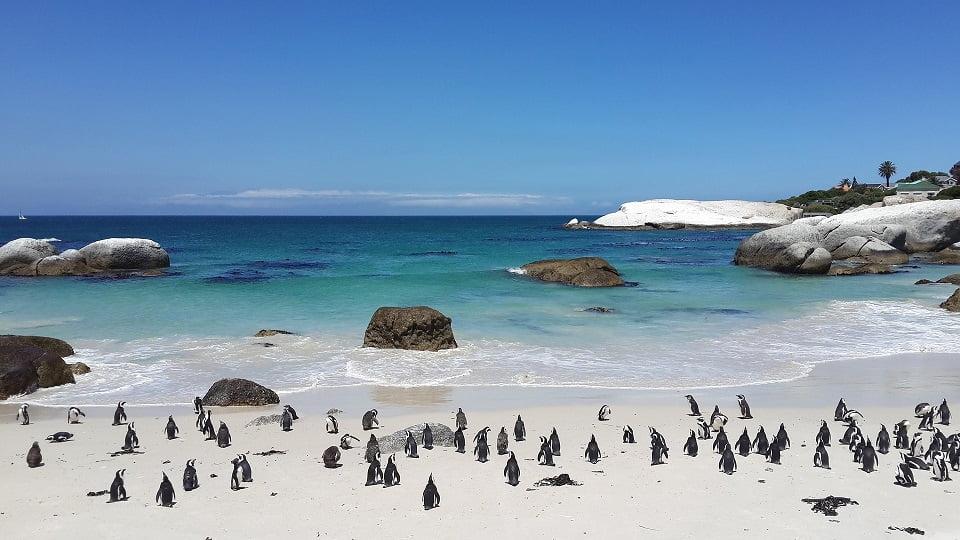 Pinguins Boulders Beach, Cidade do Cabo - Viagem Para África- Foto Pixabay