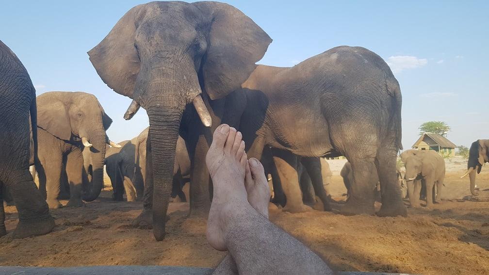 Trocando ideia com os elefantes no Elephant Sands, Botswana