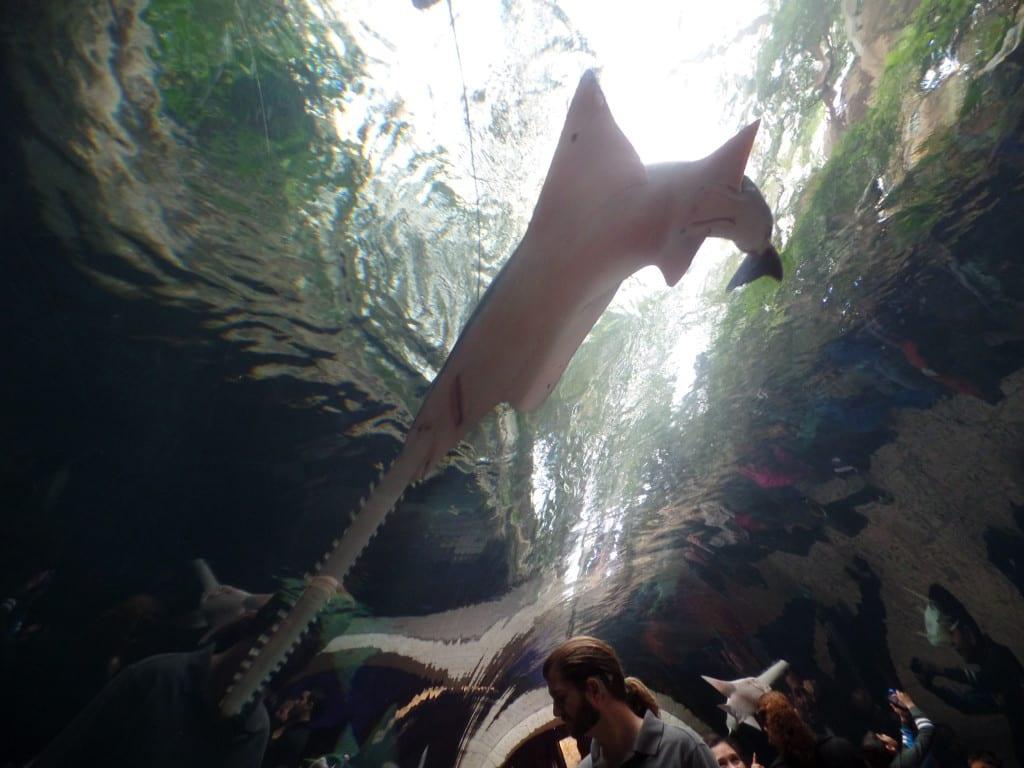 10 - Túnel de vidro no aquário da cidade - Dallas, EUA