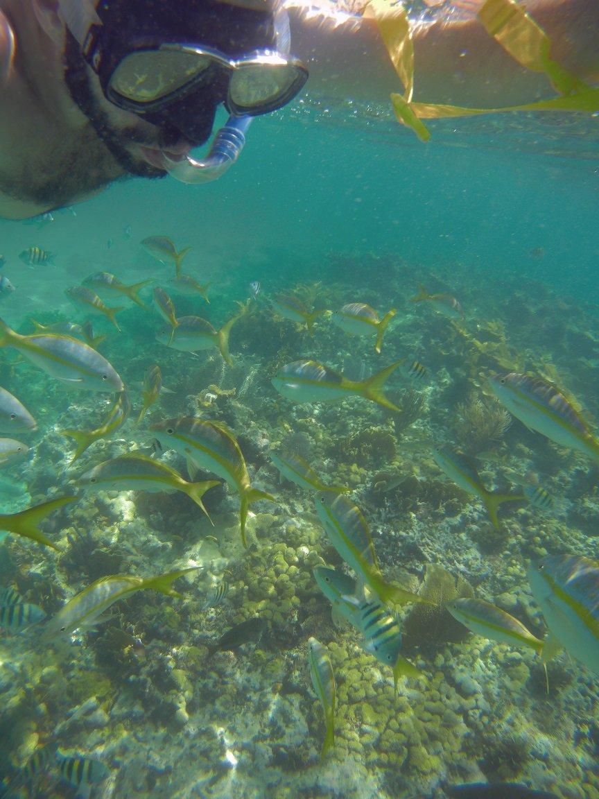 Snorkeling com os peixinhos coloridos em Cayo Coco, Cuba