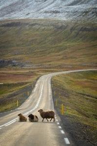 Rodovia em pista única na Islândia, verão - foto Pexels